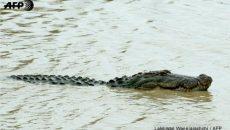 Журналист стана жертва на крокодил