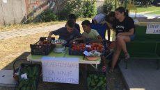 Пловдивчанчета отгледаха домати и чушки, продават ги сами