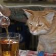 alkohol-kotka