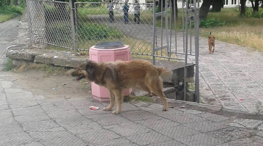 bezdomni2