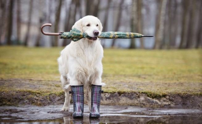 Времето: Облачно и дъждовно