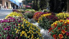 """Сладоледено лале и екзотични зюмбюли на """"Цветна есен"""" (СНИМКИ)"""
