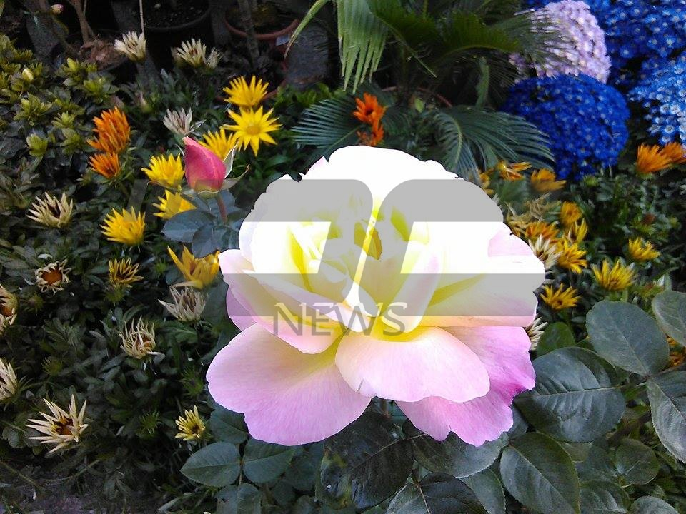 cvetna prolet (15)