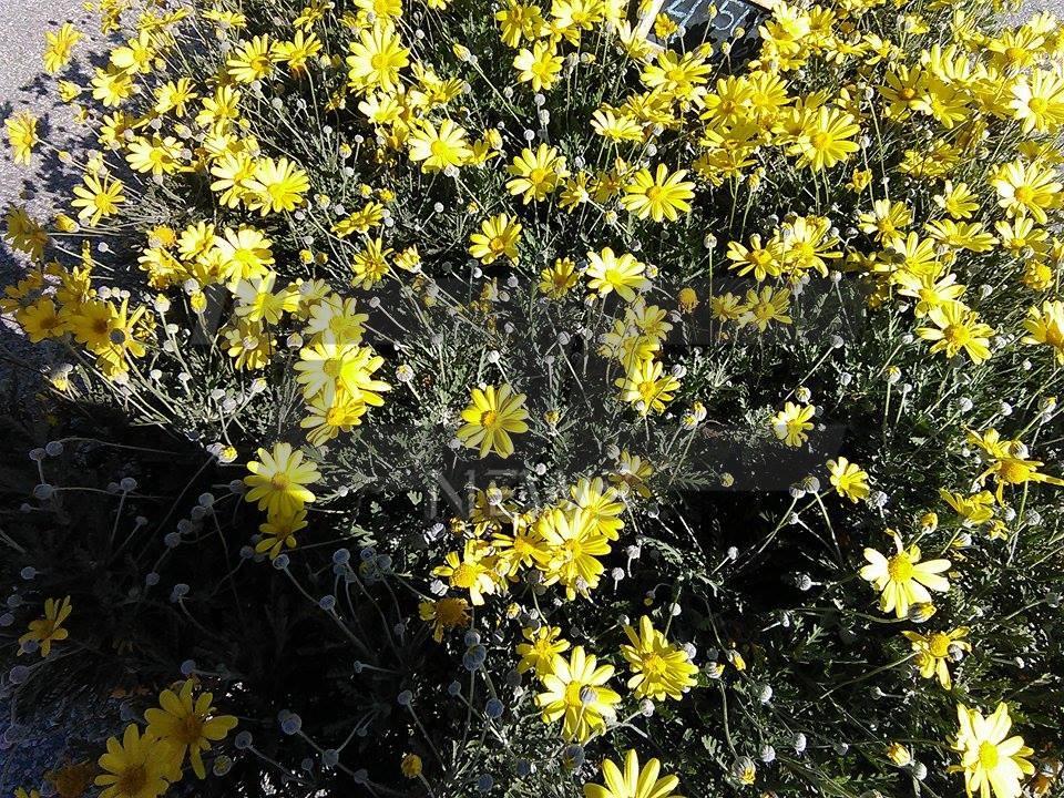 cvetna prolet (27)