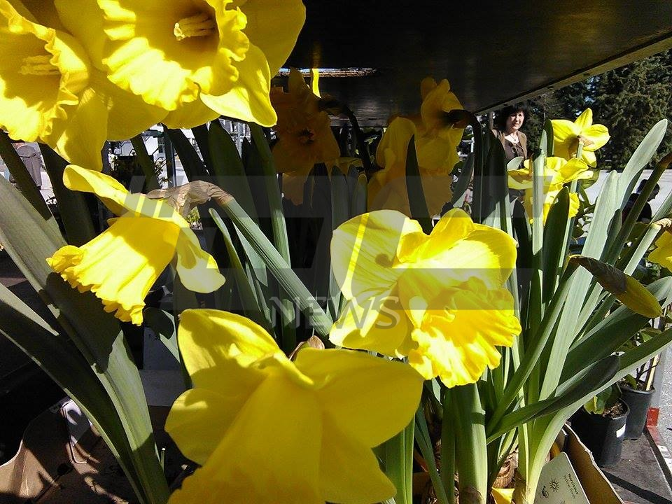 cvetna prolet (7)