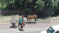 """Велоалеите в Пловдив вече служат и за разходка на коне. Това видя репортер на DCNEWS днес по обяд на бул. """"Марица Юг""""."""