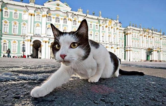 Котките - пазители на Ермитажа