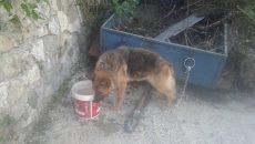 Зарязаха немска овчарка край Асеновград без храна и вода