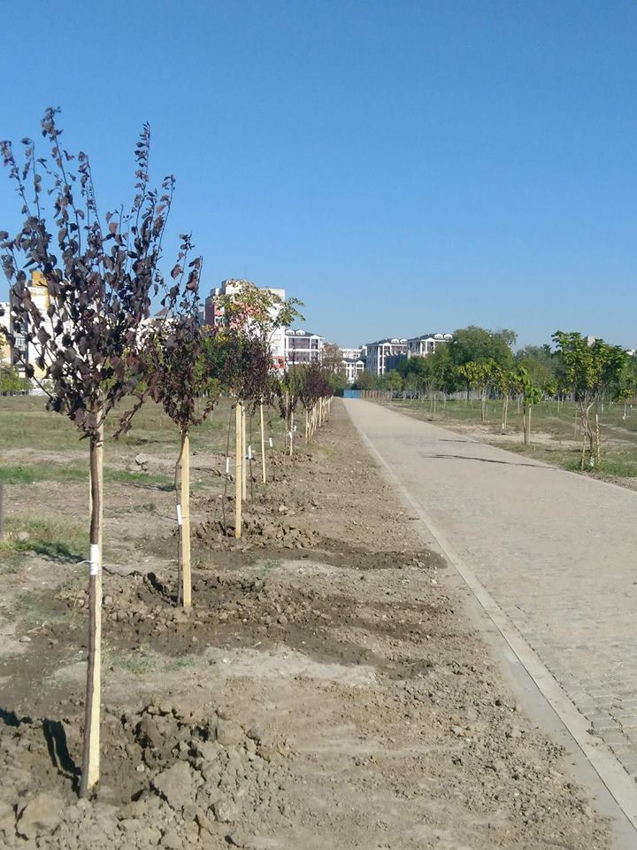 """Доброволци посадиха 70 дръвчета в парк """"Лаута"""" (СНИМКИ)"""