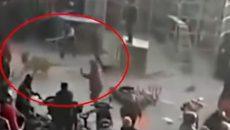 Тигър от цирка изскочи от клетката си и нападна зрителите (ВИДЕО)