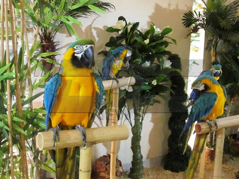 papagali (30)