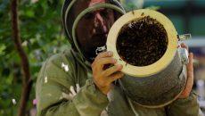 Хиляди пчели нападнаха площад в Ню Йорк