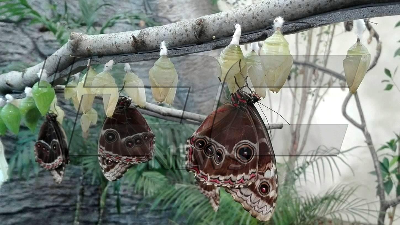 Хранят пеперуди с портокали и банани, не искали круши (СНИМКИ И ВИДЕО)