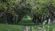 """Ореховата гора в село Белащица, община """"Родопи"""""""