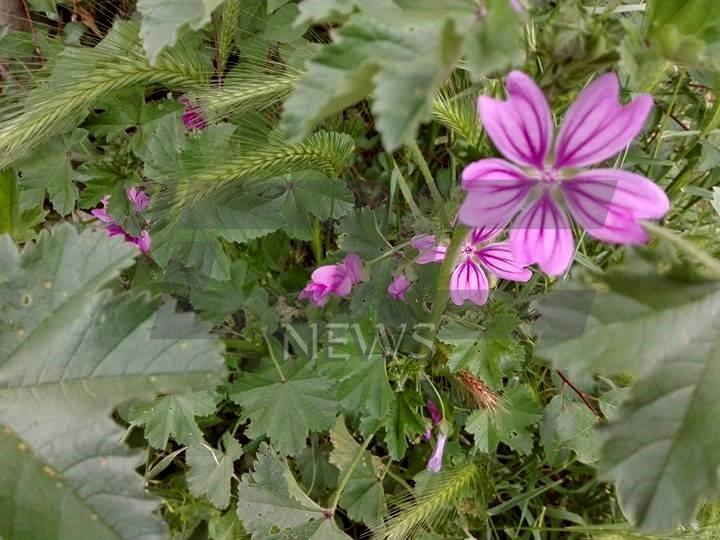 vreme cvetia (3)