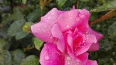 времето - дъжд