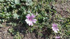 Времето: Циганското лято продължава