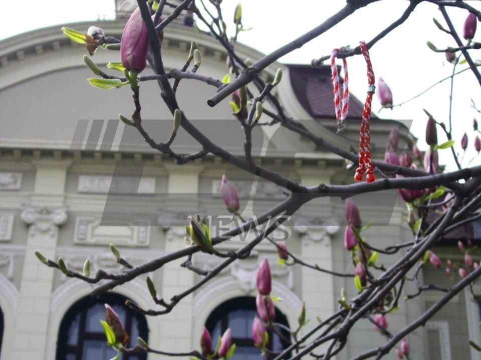 vremeto magnolia