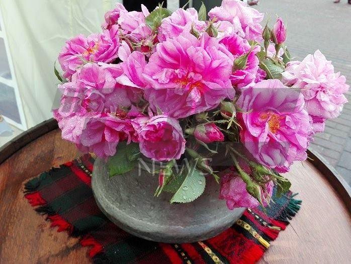 vremeto rozi