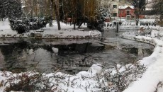 zima_2016 (22)