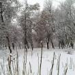 zimni_2017 (8)