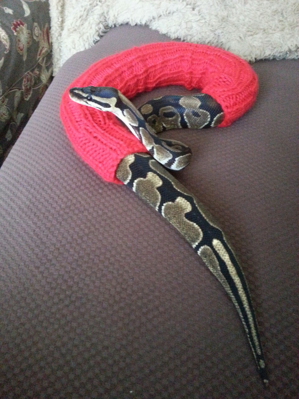 zmii puloveri