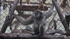 zoopark_sofiq (53)
